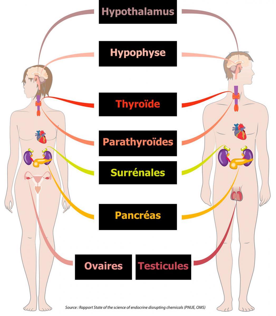 perturbateurs-endocriniens.jpg